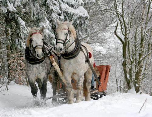 Hevoset (96 palaa)