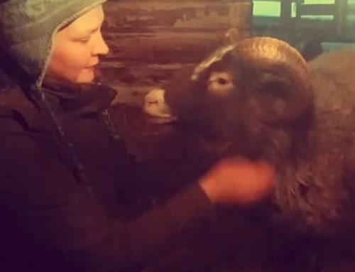 Lammasystäviä 2 – Lammas olen Jeesuksen